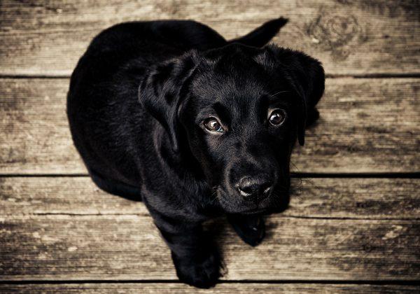 חשוב לדעת: עלויות החזקת כלב בישראל
